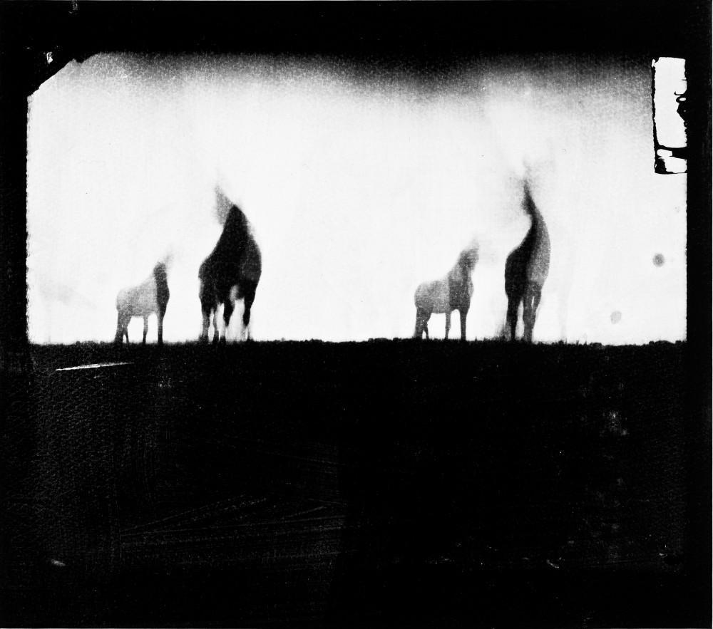 Horse Latitudes 3