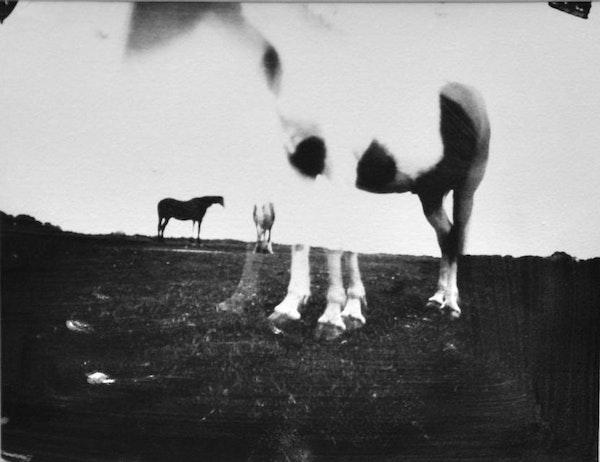 Horse Latitudes 1