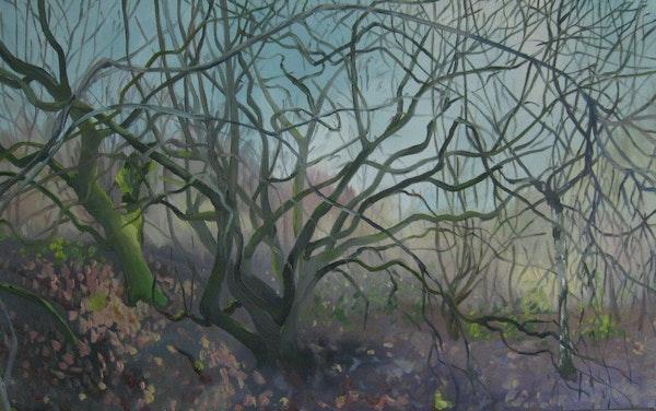 January Blackthorn
