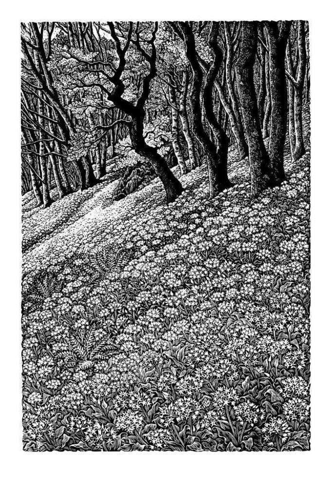 Woodlands with Wild Garlic SUE SCULLARD