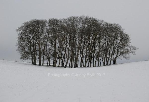Walnut Spinney, Winter, 2017