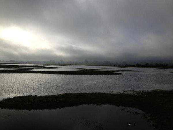 Flood Plains, 2016