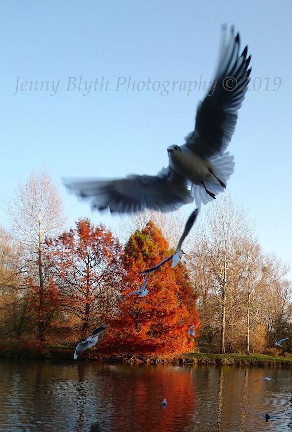 Seagulls, University Parks Oxford 2018