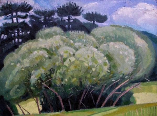 Kennington Water Meadow